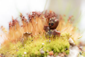Baby Groot in the moss - @teddi_toyworld
