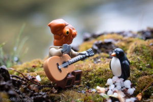 Ackchu serenades the penguin - @teddi_toyworld