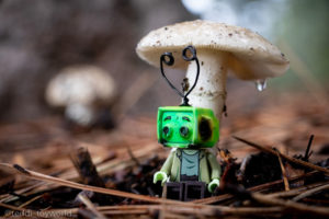 Ray Tenny takes shelter during the rain - @teddi_toyworld