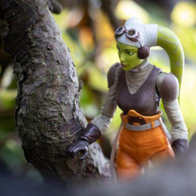 Featured Image: Hera in the woods - @teddi_toyworld